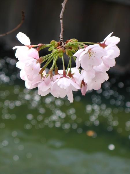 springphoto18.JPG