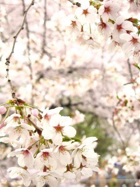 springphoto25.JPG